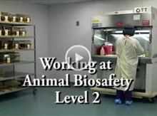 Videos - ABSA Working at Animal Biosafety Level 2